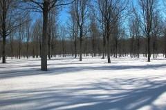 tree-line-dscn0164c-copy