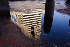 building and pigeon-reflections-2124