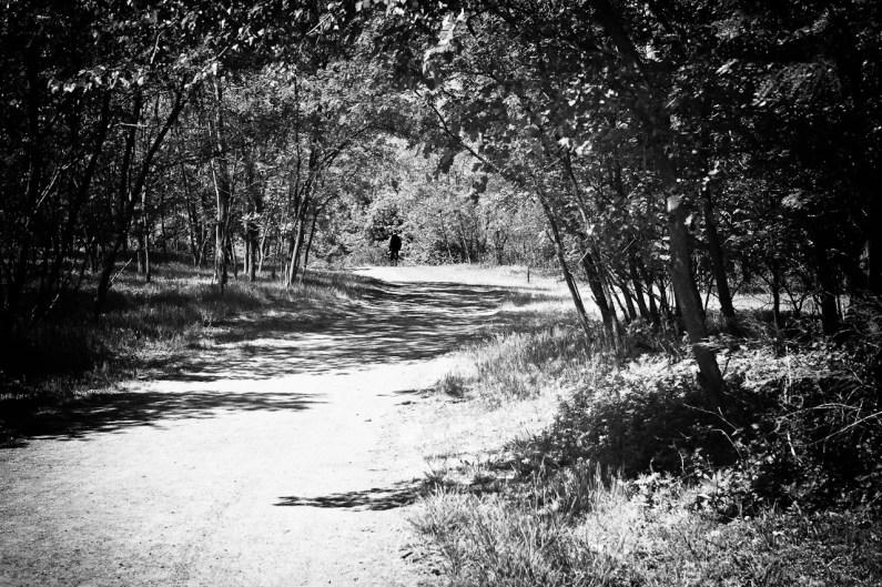 road-4135