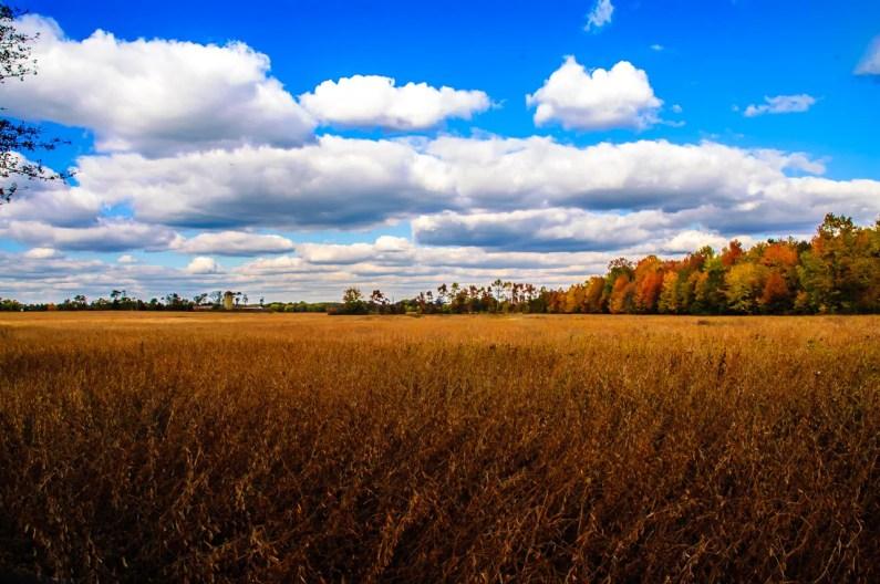 pinelands-landscape-ldallara-1