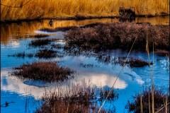 cranberry-bog-pine-lands-