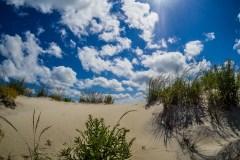 assateague-dunes--2355