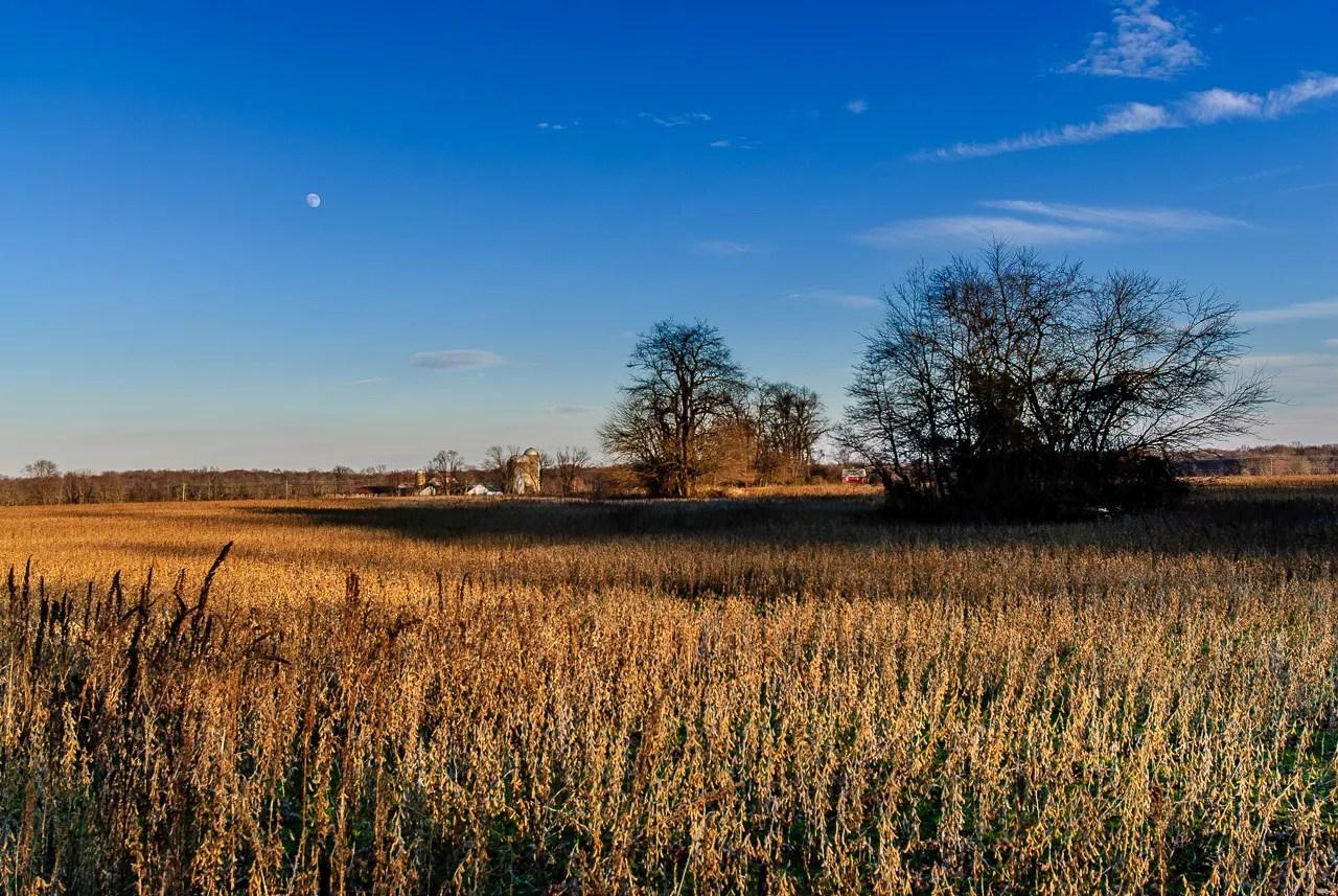 medford-landscape-0001