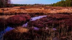 Purple Velvet Plains
