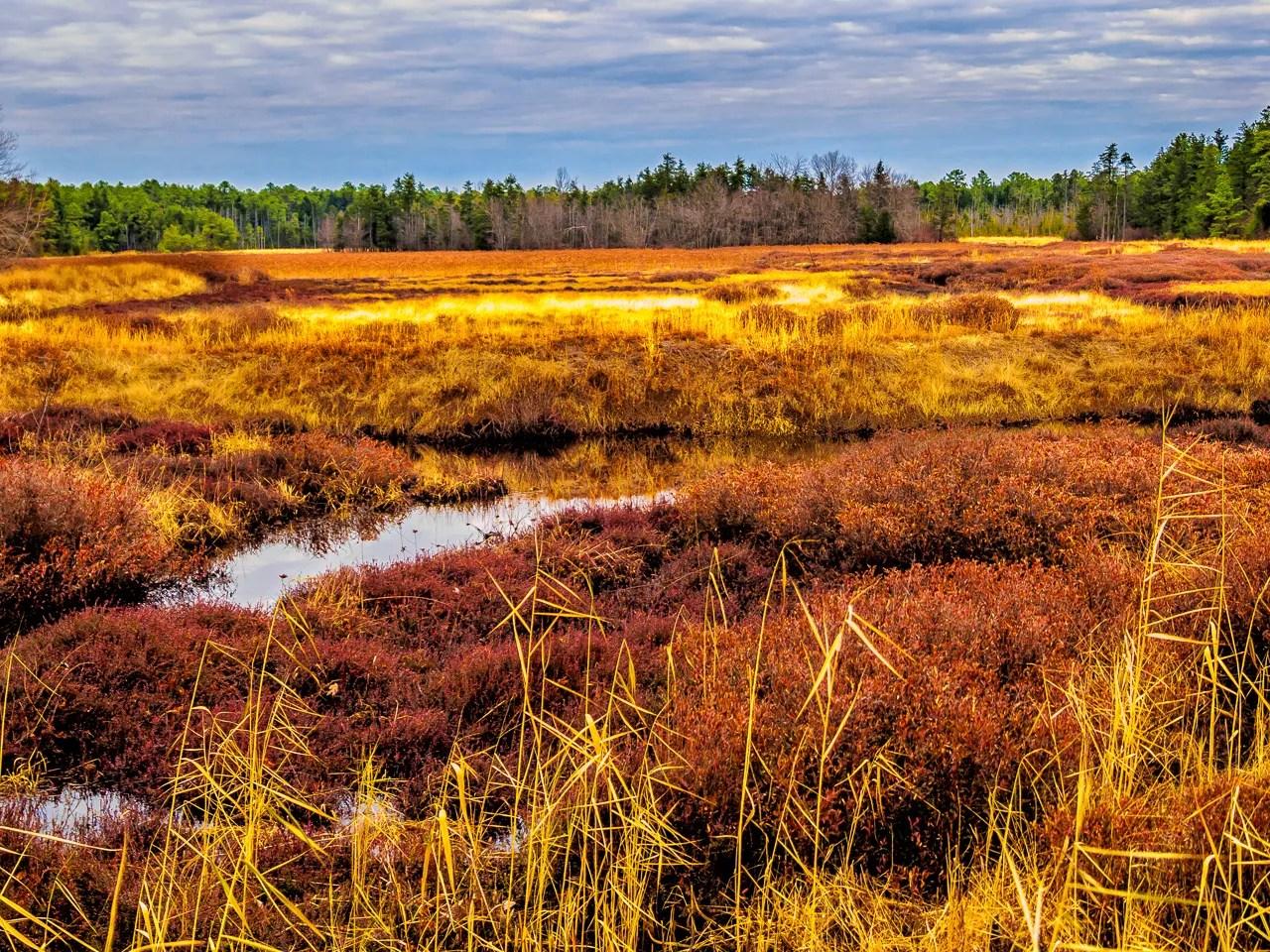 pinelands again