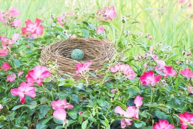 bird-nest-2171412_960_720