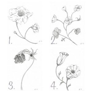 Flower Sketch Mini Gallery – FREE PRINTABLES