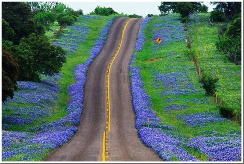 Texas hill country blue