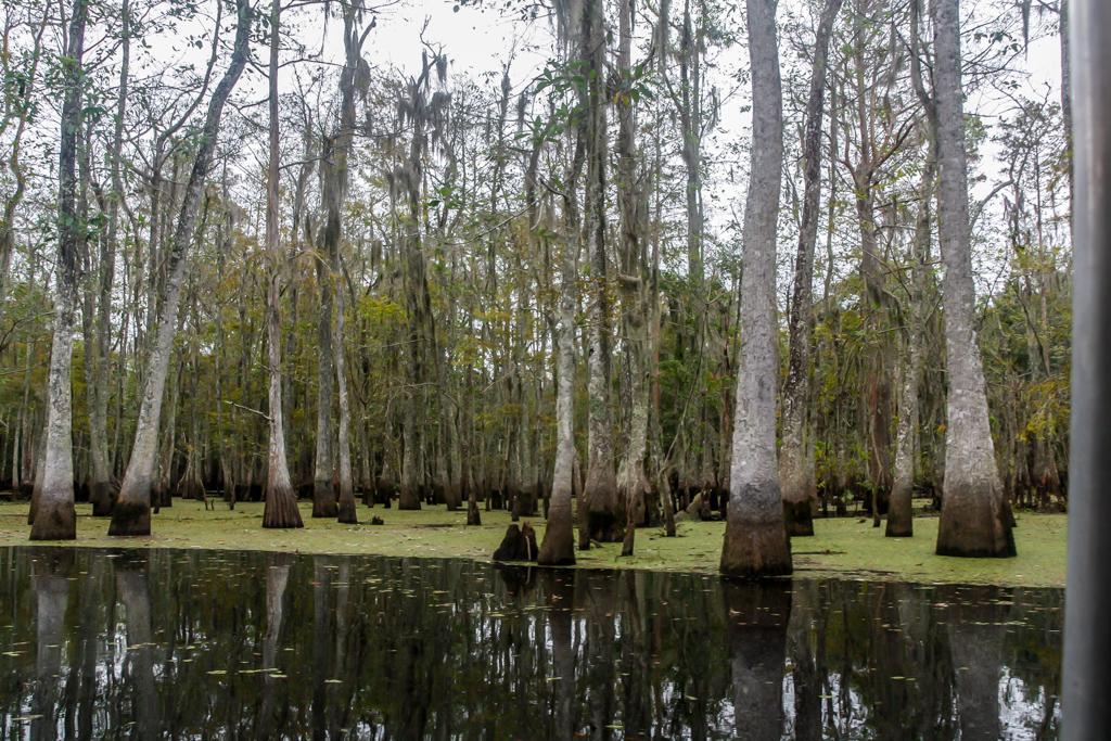 honey island swamp louisiana landscape