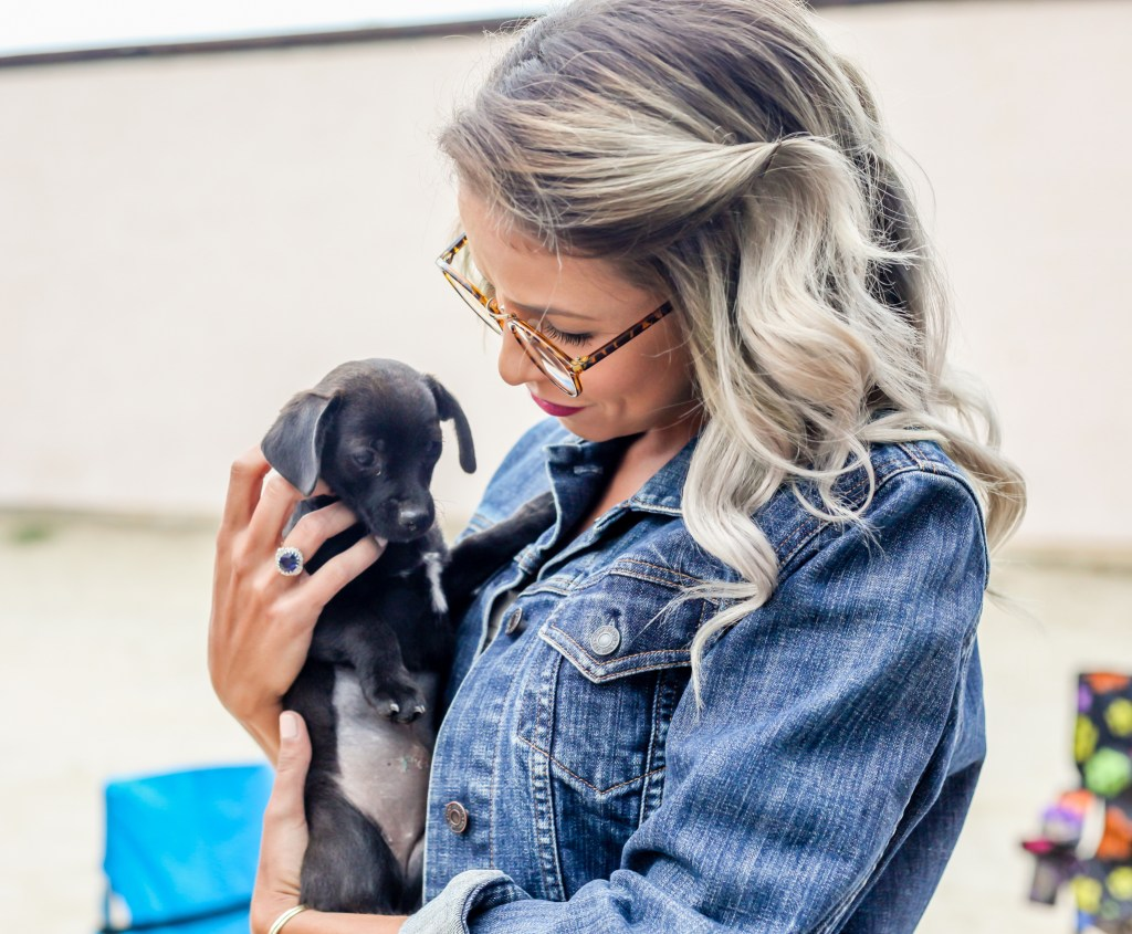 silver hair puppy adoption