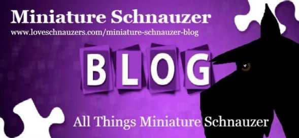 Miniature Schnauzer Blog Logo For www.loveschnauzers.com