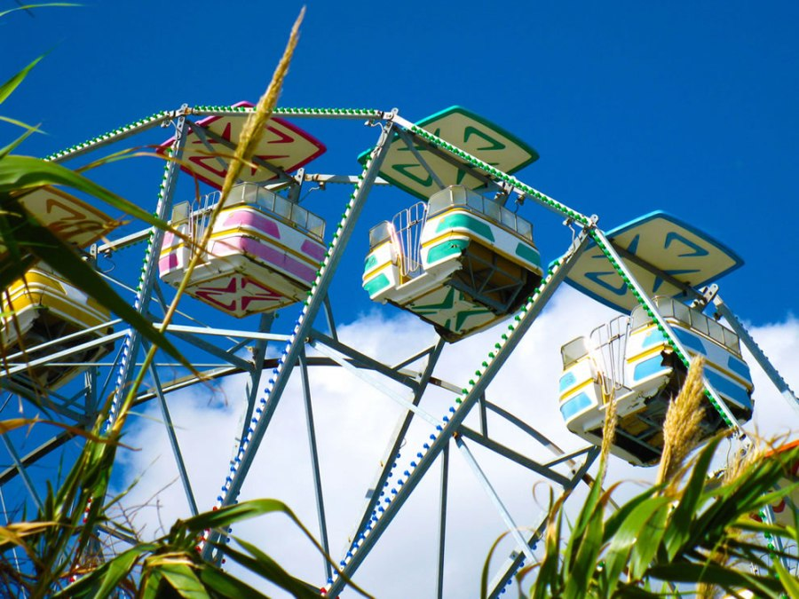 weeds and rides - long way still until nature reclaims abandoned 6 Flags