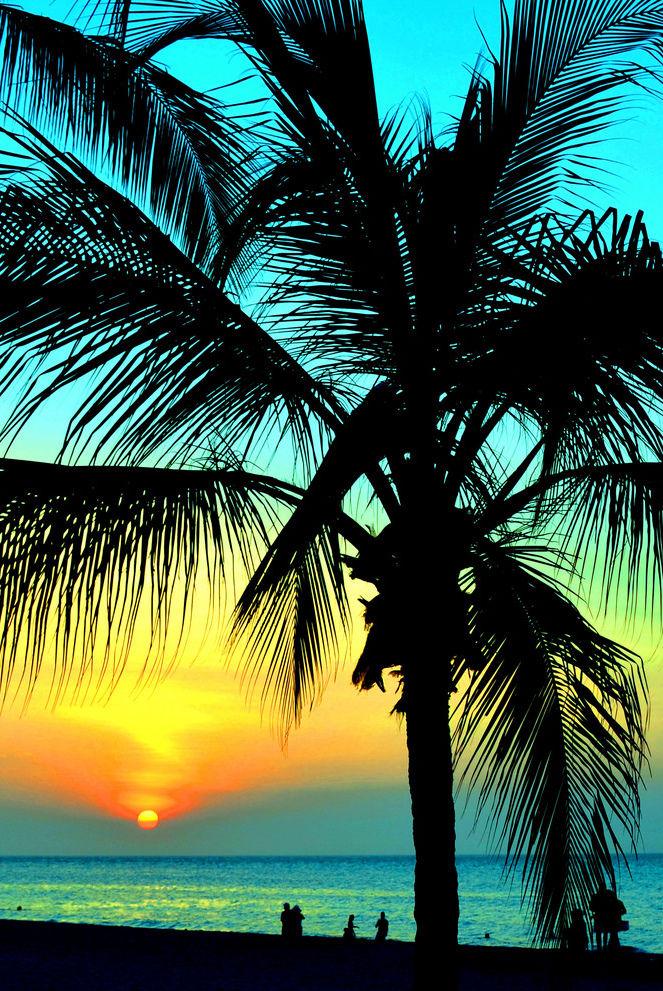 Creativity Palm Trees Sunset Tumblr Tree On Beautiful Design