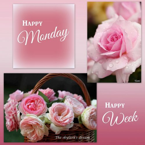 Medium Crop Of Happy Monday Pics