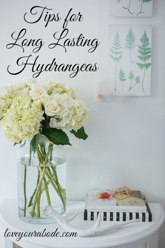 Tips for Hydrangea care from love your abode