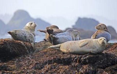 seals-902509_640