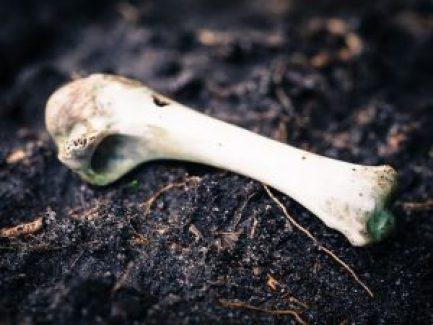 bone-949077_640