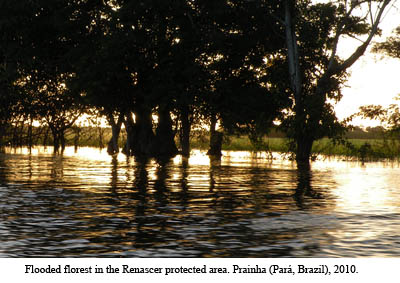 Flooded forest in the Renascer protected area