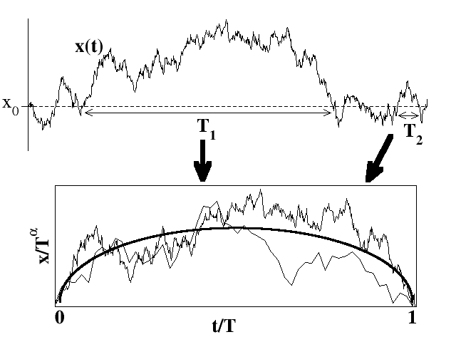 Average shape of fluctuations