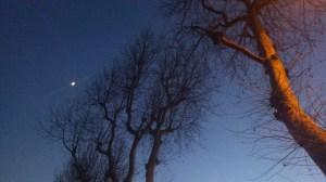 alberi e luna