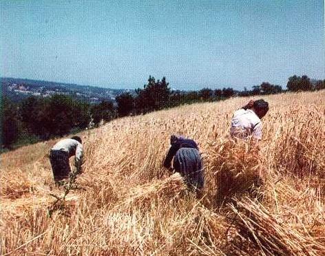 Siamo sicuri d'aver fatto bene a diventare agricoltori?