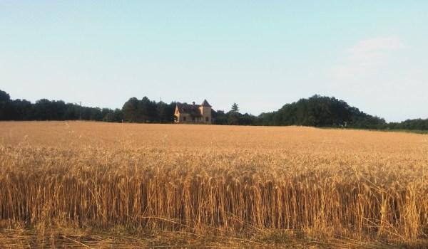 campo grano campagne Francia 2015