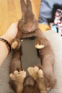 Conigli e cellulari