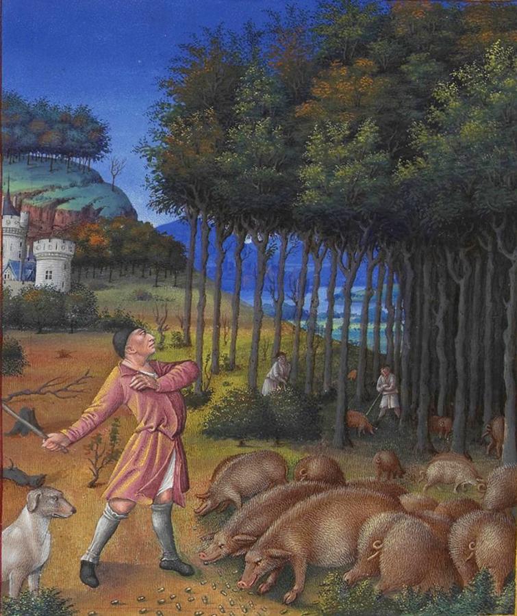 Un porcaro, Très riches heures du Duc de Berry