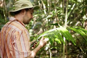 Ecology and environmental conservation. Ecologist in panama hat examining leaves of green plant, searching for leaf spot diseases, looking serious. Male scientist making scientific study outdoors