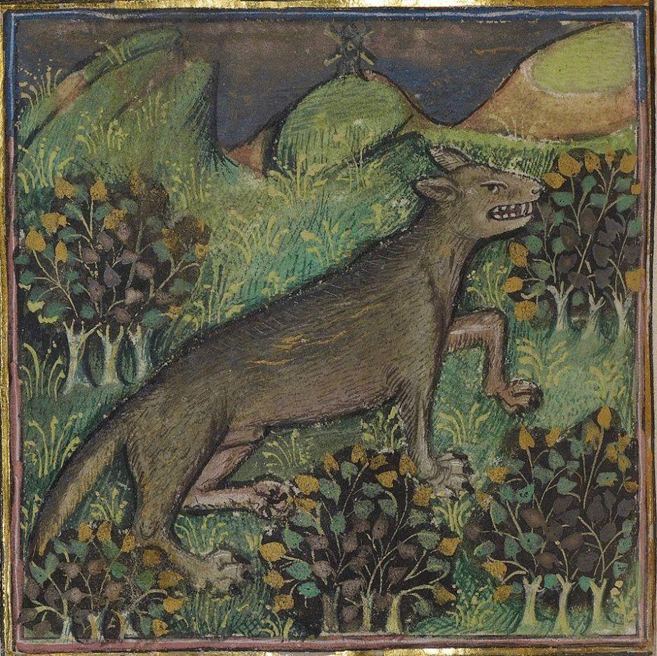 Un lupo in una miniatura
