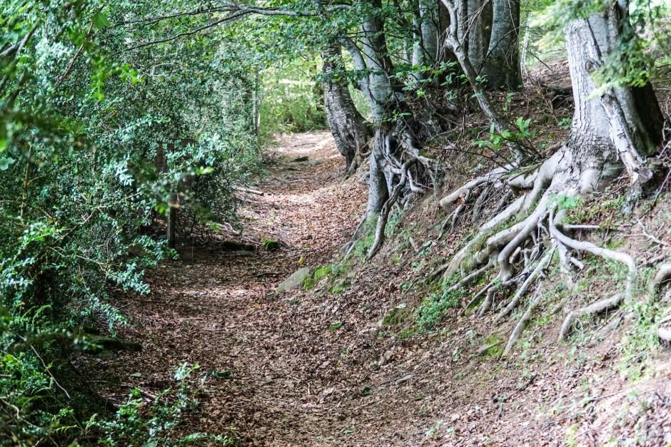 orsigna-tiziano-terzani-sentiero-nel-bosco