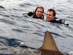 l'oceano è grande ma quello squalo doveva proprio passare di qui