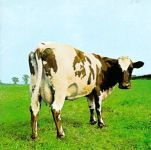 La mucca dei Pink Floyd
