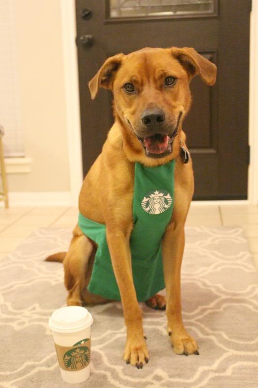 Toby the Starbucks Barista