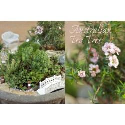 Small Crop Of Fairy Garden Trees