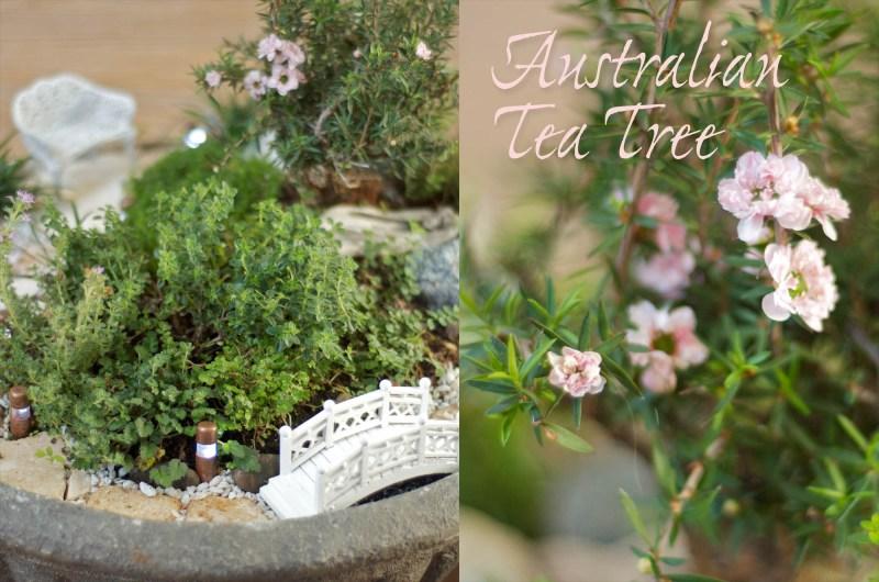 Large Of Fairy Garden Trees