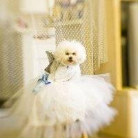Hundefressnapf mit echten Swarovski Kristallen