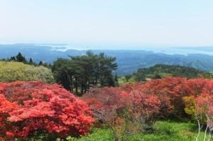 田束山ツツジ