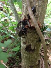 珍しい昆虫も見つかるかも…?!