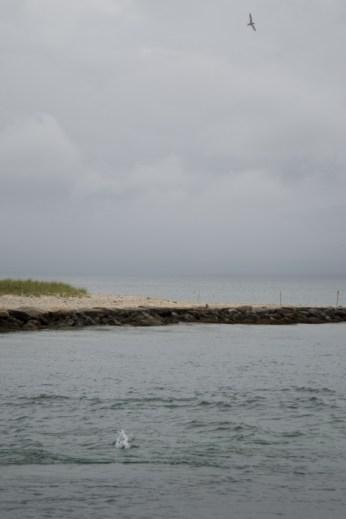 Au bord du lake Tashmoo - Martha's Vineyard