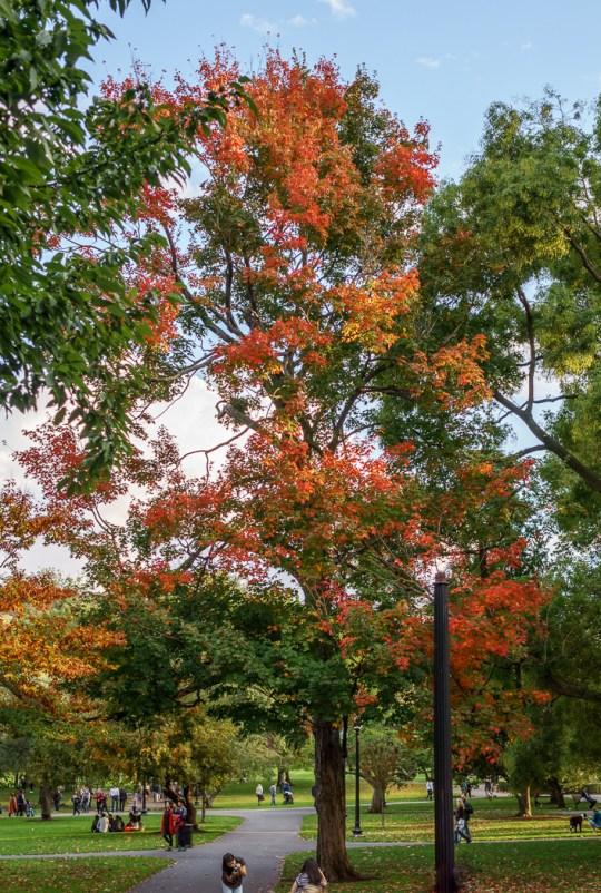 Fall Boston été indien Boston Common