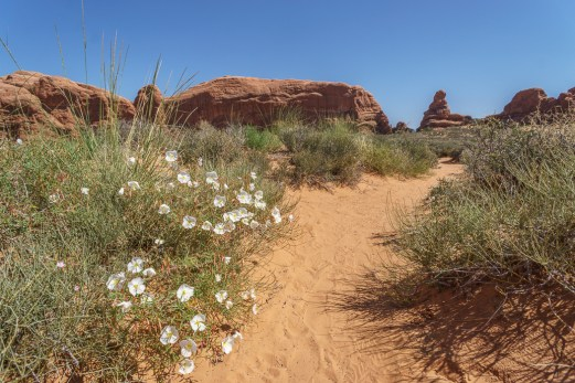 arches-national-park-2