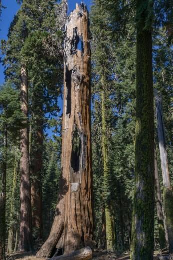 sequoia national park californie-3