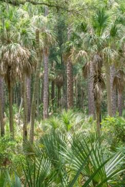 Jungle - Hunting Island State Park Caroline du Sud-7