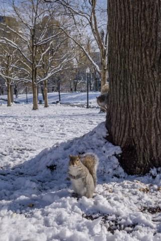 Boston hiver neige-18