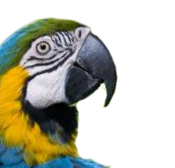Lurking_macaw_parrot
