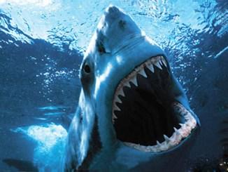 blog_shark[1]