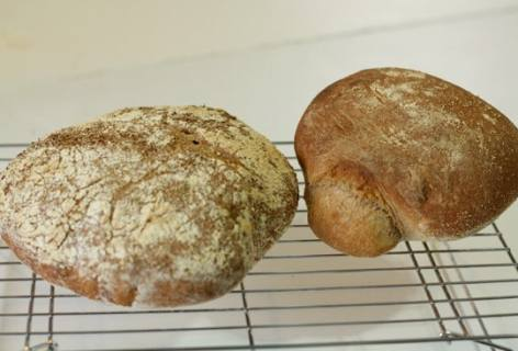Basic No Knead Bread