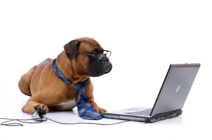 Online Poker Dog