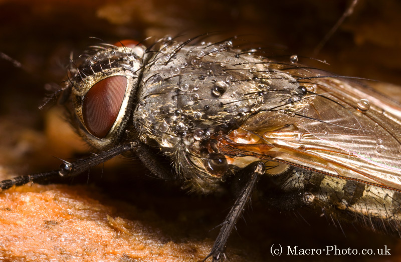 Stacked Macro Fly